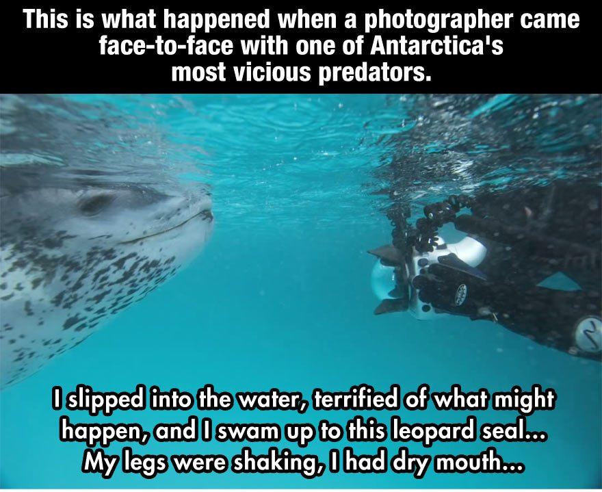 leopard-seal-incident-1