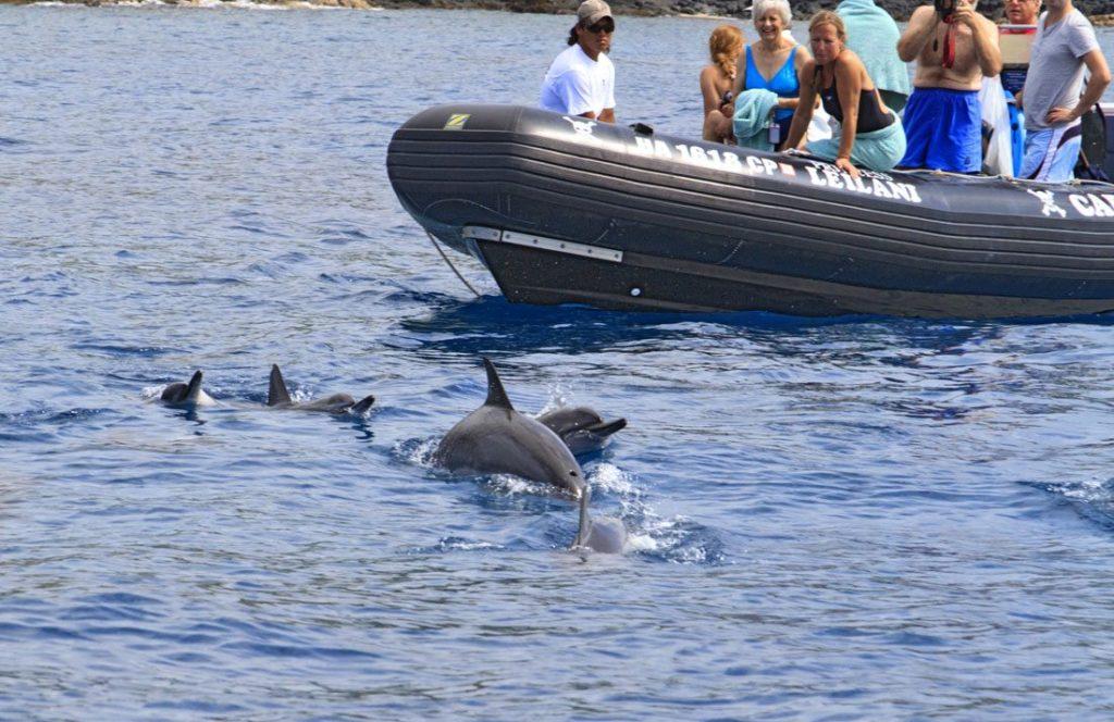 people-watching-spinner-dolphins-in-Kealakekua-bay-hawaii