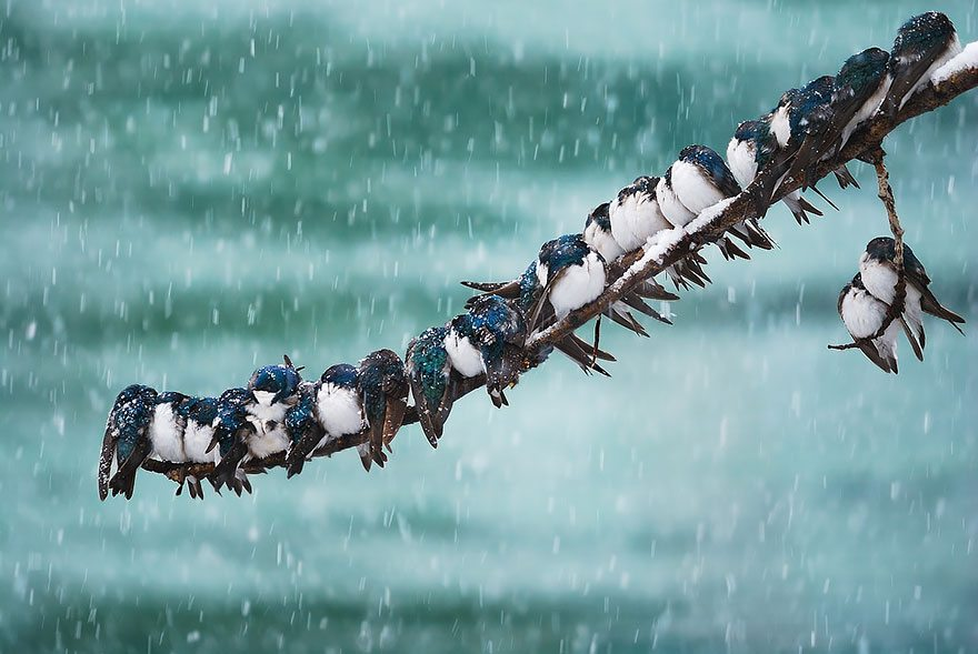 birds-keep-warm-bird-huddles-1__880