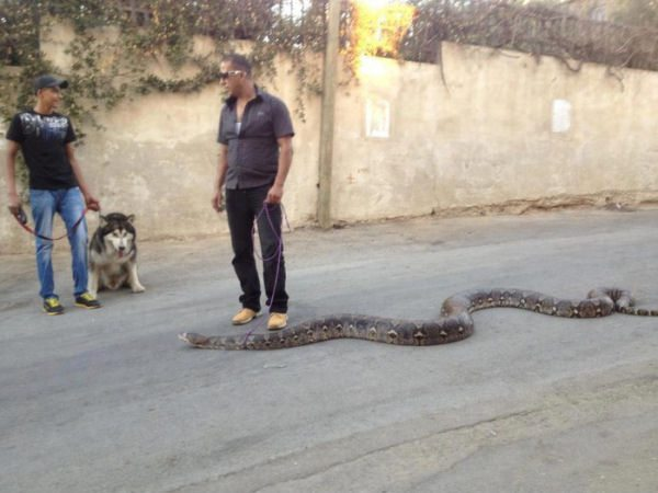 wtf-walking-the-snake1