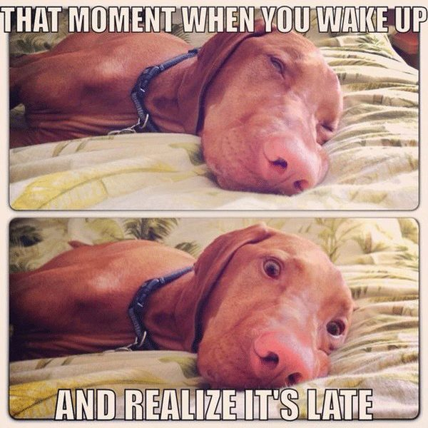 11-memes-that-sum-up-the-terror-of-waking-up-late