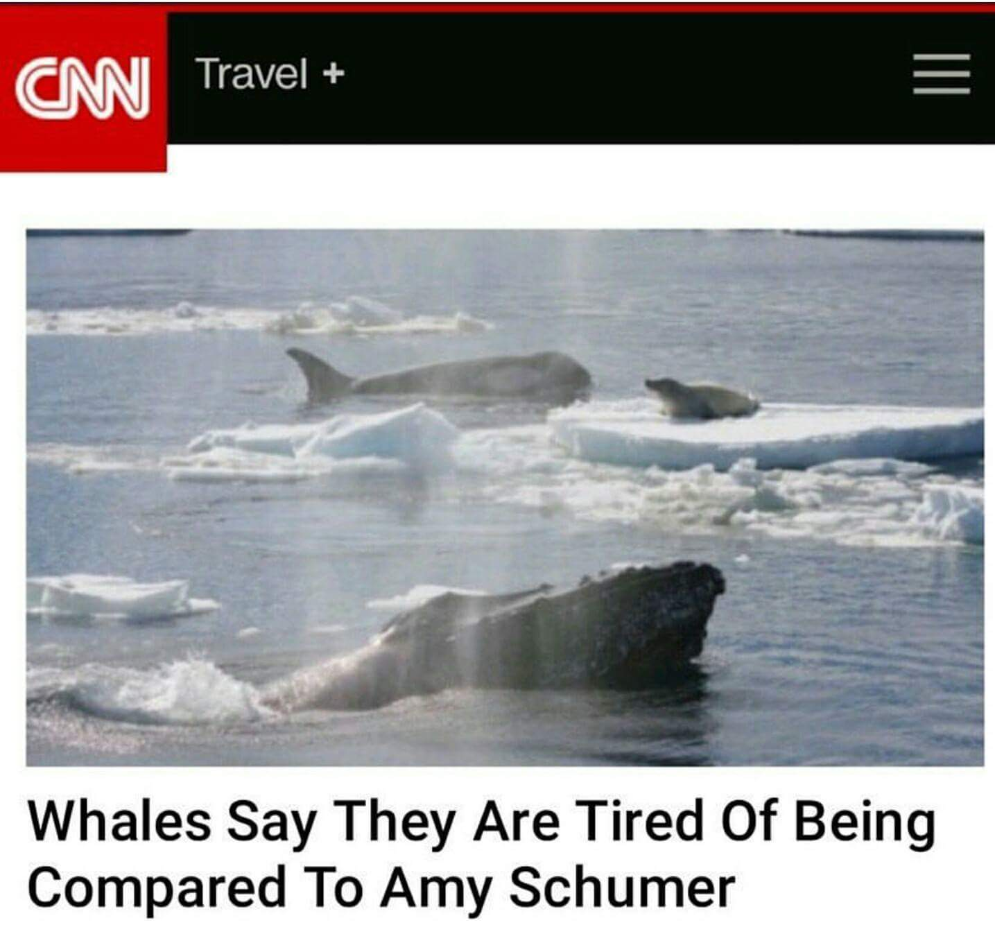 19-whales-tired-of-comparison