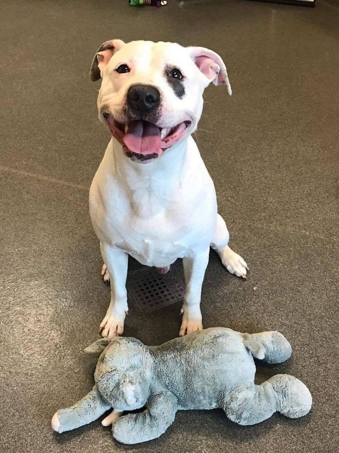 dog-gets-adopted-5
