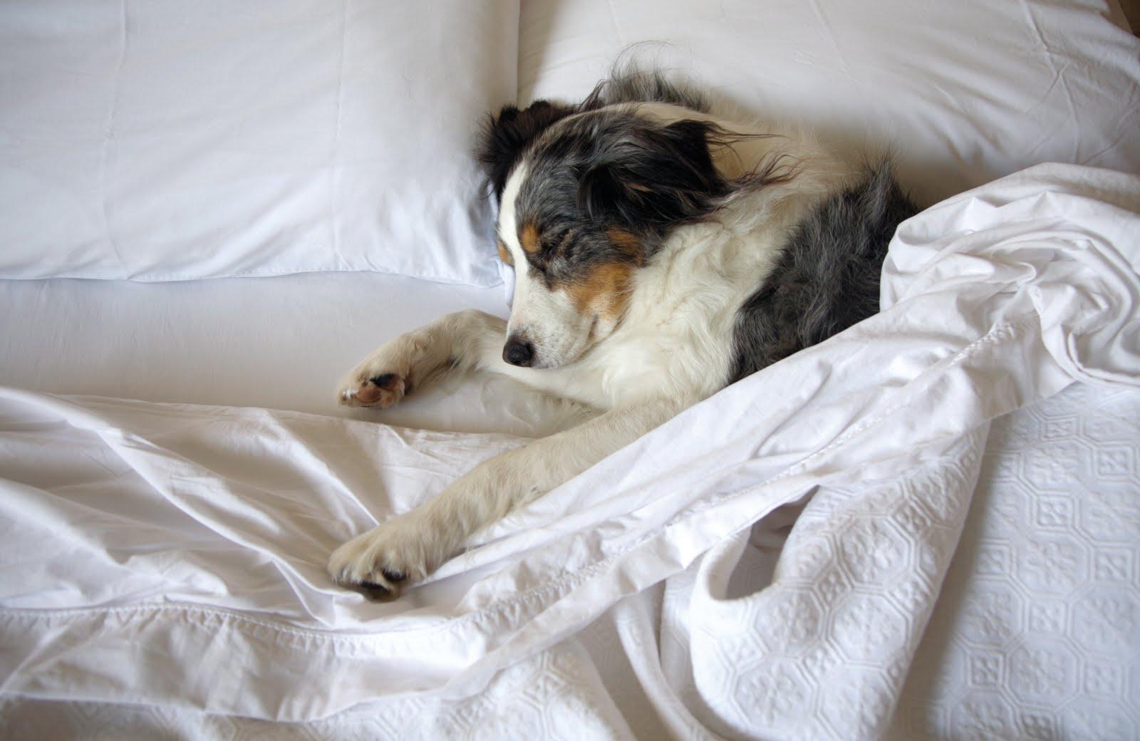 dog-sharing-bed