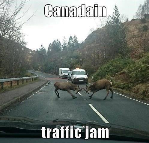 funny-traffic-pics-4