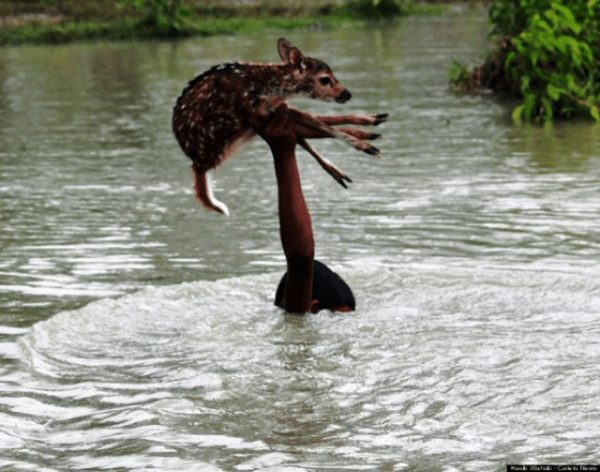 saving-animals-1