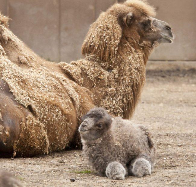 baby-animals-7